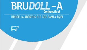 Brudoll-A Conjunctival
